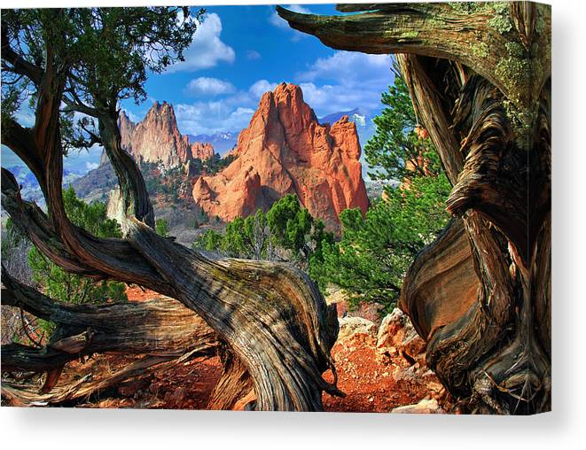 Garden Of The Gods Canvas Print featuring the photograph Garden framed by twisted Juniper Trees by John Hoffman