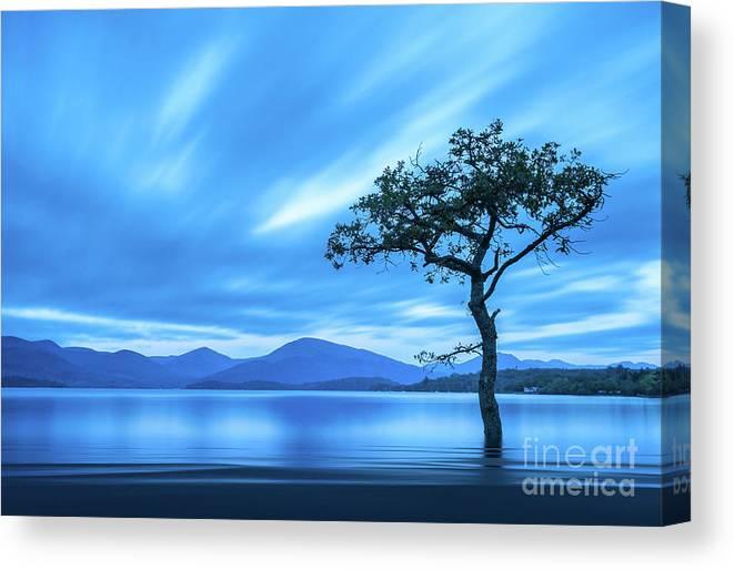 Milarrochy Bay Canvas Print featuring the photograph Lone tree Milarrochy Bay by Janet Burdon