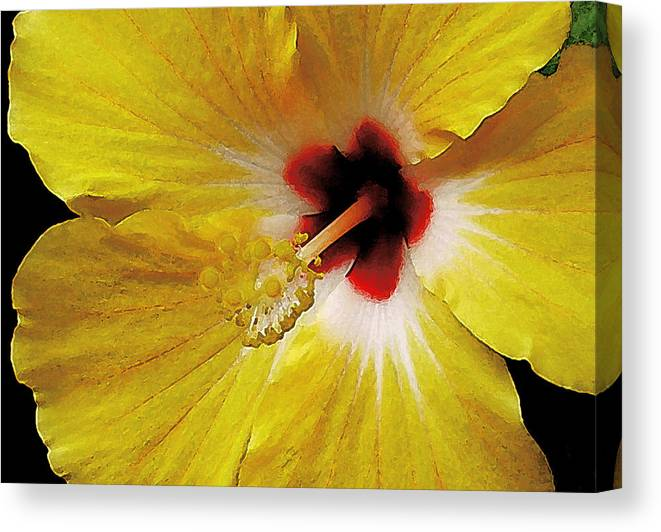 Hawaii Iphone Cases Canvas Print featuring the photograph Yellow Hibiscus With Red Center by James Temple