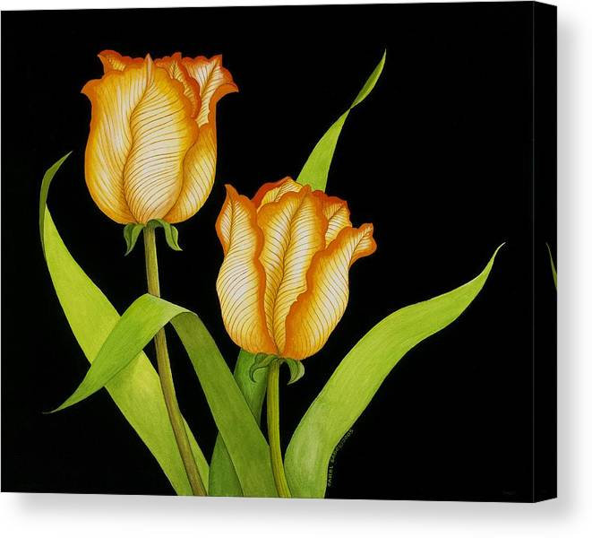 Two Orange-yellow Tulips Posing On A Black Background Canvas Print featuring the painting Posing Tulips by Carol Sabo