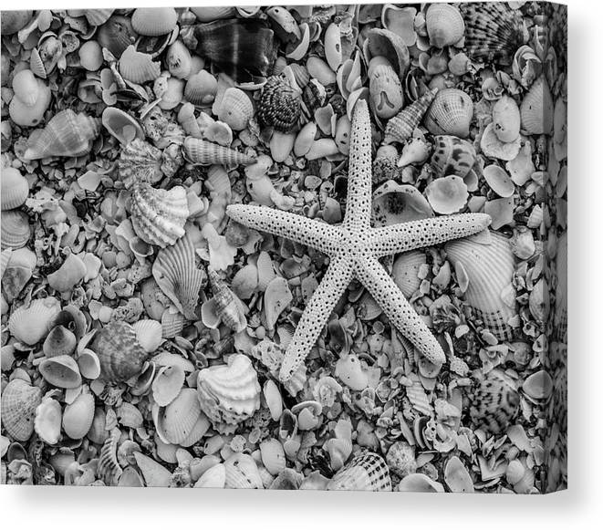 Shells Of Sanibel Island Canvas Print featuring the photograph Shells Of Sanibel Island by Kyle Findley