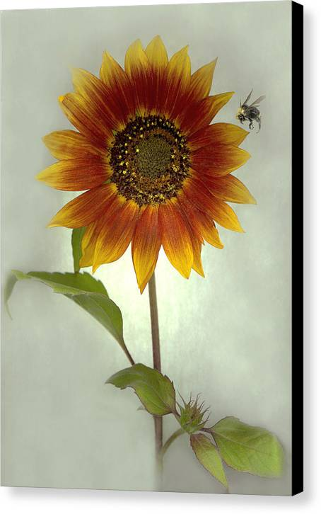 Sunflower Canvas Print featuring the mixed media Sunflower And Bee by Sandi F Hutchins