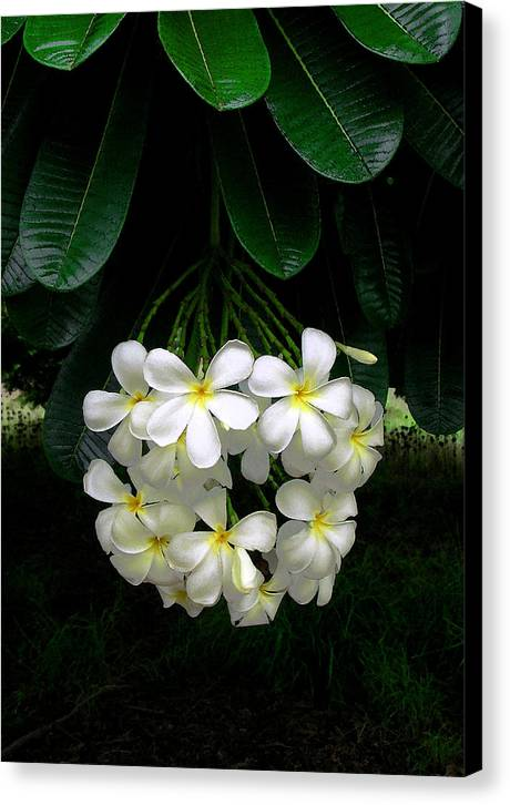 Hawaii Iphone Cases Canvas Print featuring the photograph Kawela Plumeria by James Temple