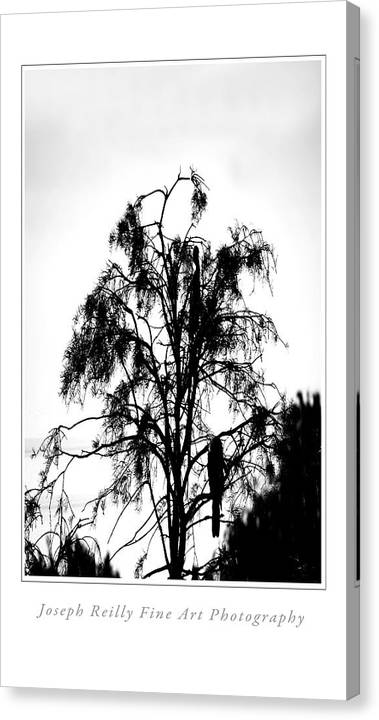 Canvas Print featuring the photograph Winter Sky Wood Storks by Joseph Reilly