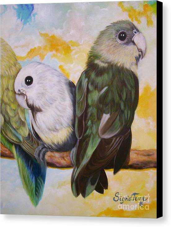White Faced Love Birds Canvas Print featuring the painting Chloe The  Flying Lamb Productions      White Faced Lovebirds by Sigrid Tune