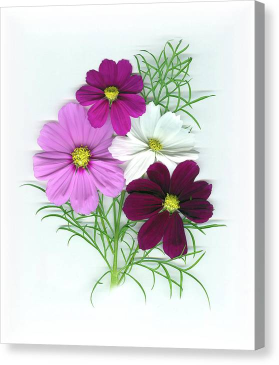 Cosmos Canvas Print featuring the mixed media Cosmos Bouquet by Sandi F Hutchins