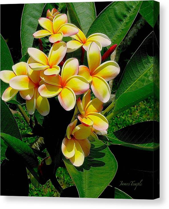 Summertime In Hawaii Canvas Print featuring the photograph Summertime In Hawaii by James Temple