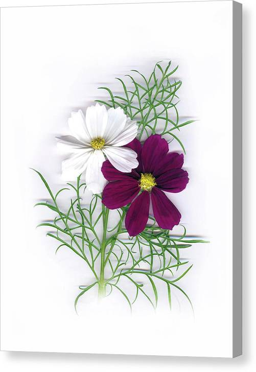 Canvas Print featuring the photograph Cosmos Duet by Sandi F Hutchins