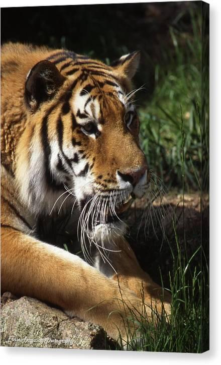 Animal Canvas Print featuring the photograph Big Cat by Ernie Ferguson