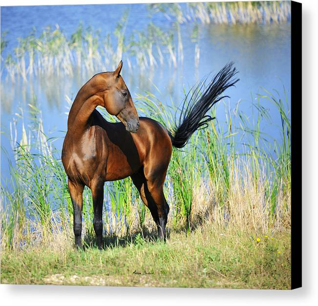 Horses Canvas Print featuring the photograph Gench by Artur Baboev