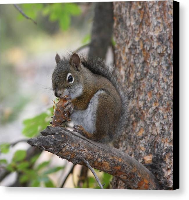 Squirrel Canvas Print featuring the photograph Red Squirrel by Doug Johnson