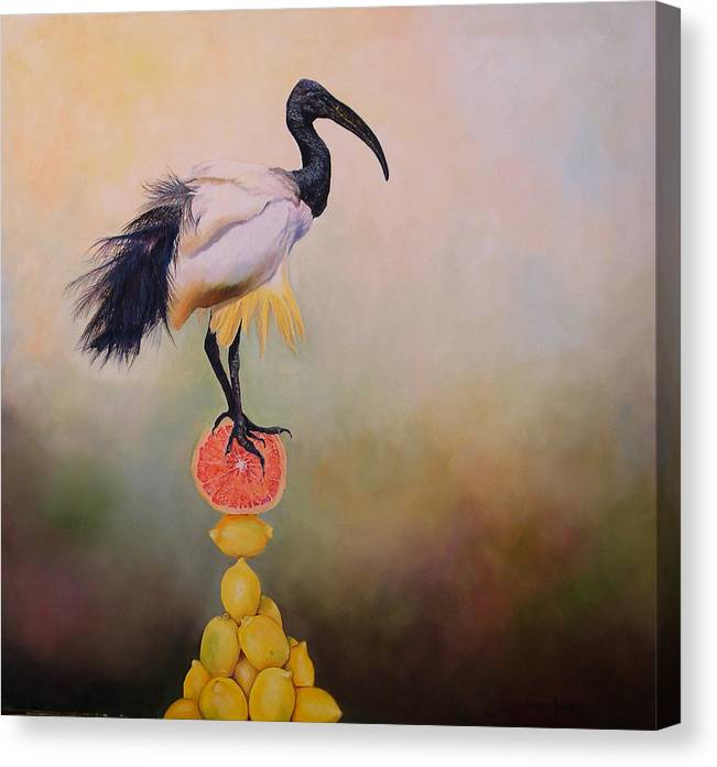Bird Canvas Print featuring the painting Sacred Ibis Lemon Pyramid by Valerie Aune