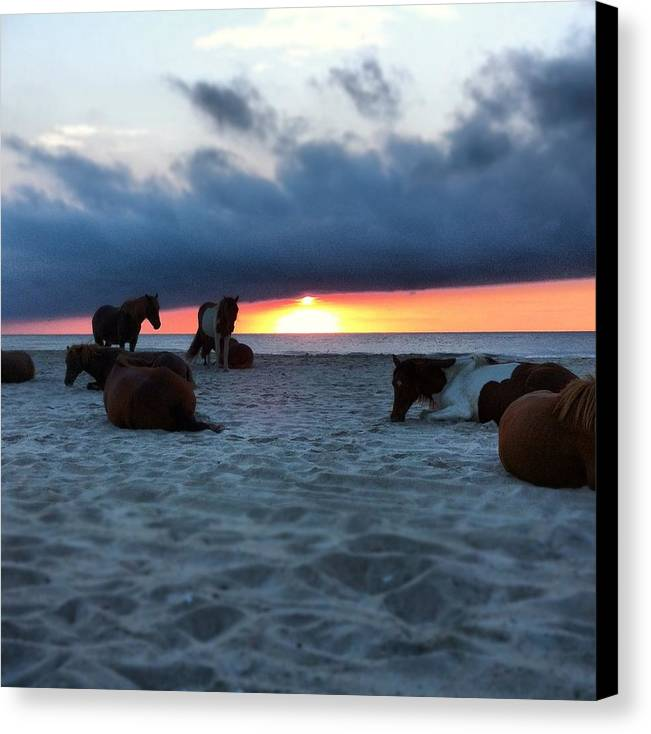 Assateague Canvas Print featuring the photograph Assateague Sunrise by Phillip Woolf