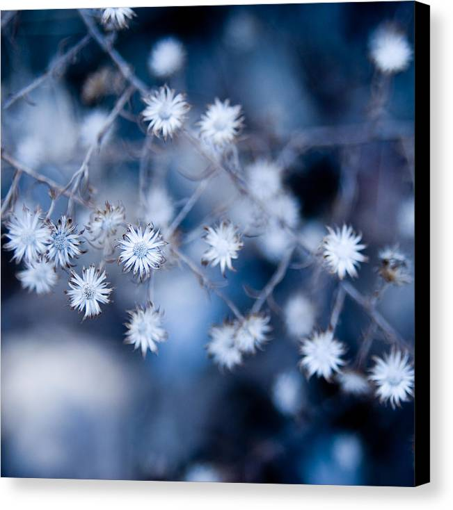 Flower Canvas Print featuring the photograph Lonely Winter by Ryan Heffron