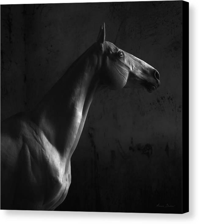 Horses Canvas Print featuring the photograph Gagur by Artur Baboev