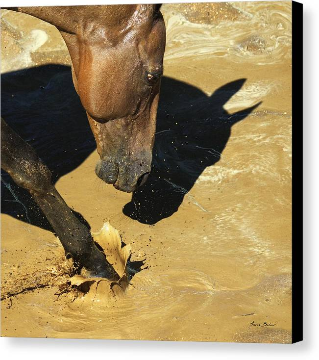 Horses Canvas Print featuring the photograph Gyaurs #3 by Artur Baboev