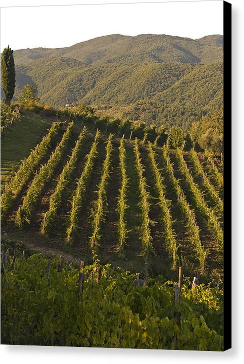 Tuscany Canvas Print featuring the photograph Tuscan Vineyards At Sunset by Jim DeLillo