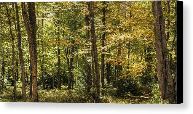 Autumn Canvas Print featuring the photograph Autumn Woods II by Lisa Hurylovich