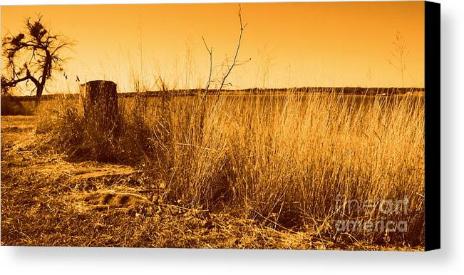 Landscape Canvas Print featuring the photograph Just A View by Mickey Harkins