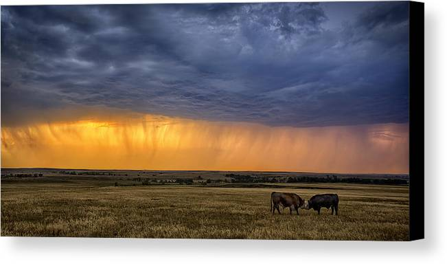 Ranching Canvas Print featuring the photograph Lifeblood by Thomas Zimmerman