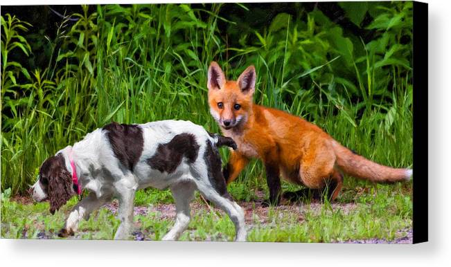 Fox Canvas Print featuring the photograph On The Scent Impasto by Steve Harrington