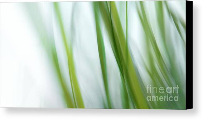 Grass Canvas Print featuring the photograph Spring by Lena Weisbek