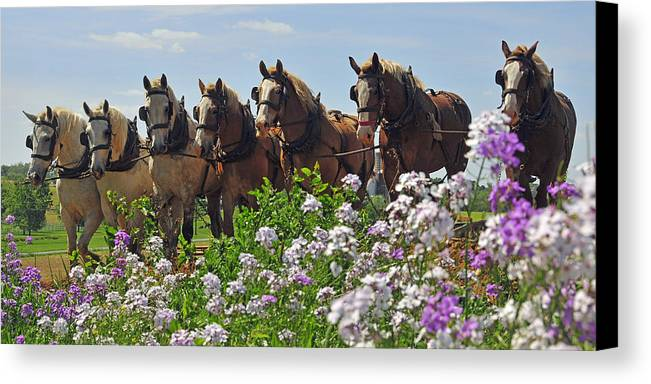 Horses Canvas Print featuring the photograph Teamwork by Dan Myers