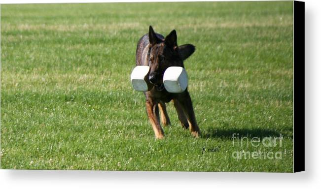 Obedience Canvas Print featuring the photograph Of2-0009 by P Russell