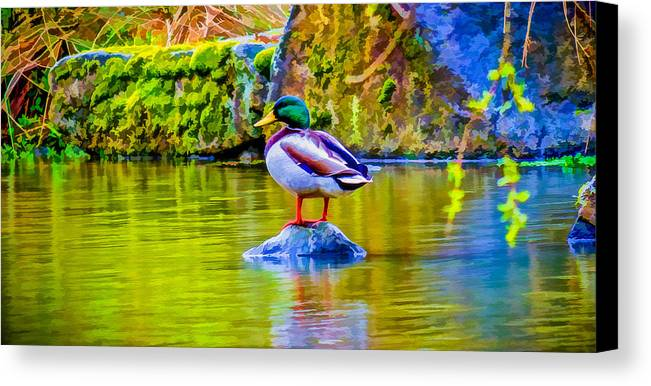 Duck Canvas Print featuring the photograph Waiting For Mrs Drake by Ken Stanback