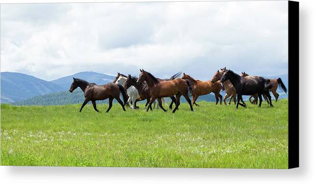 Outside Canvas Print featuring the photograph Field Of Horses by Eleszabeth McNeel