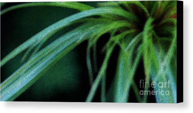 Grass Canvas Print featuring the photograph Grass Dance by Linda Shafer