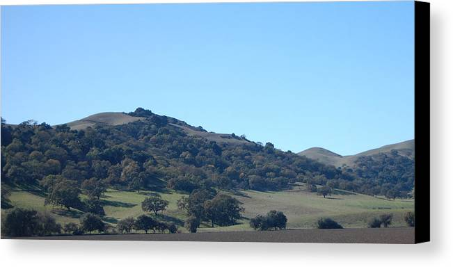 Oak Canvas Print featuring the photograph Hills Of Oak by Jean Booth