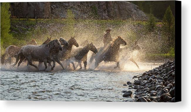 Cowboy Canvas Print featuring the photograph Morning Crossing by Jack Bell
