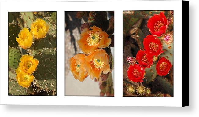 Arizona Canvas Print featuring the photograph Spring - Desert Style by Jill Reger