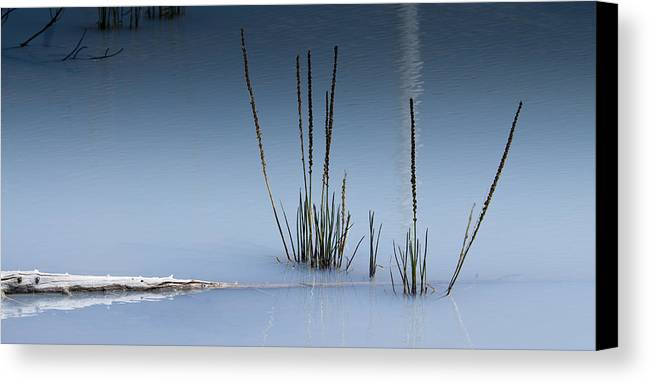 Chad Davis Canvas Print featuring the photograph The Vigor Of Life by Chad Davis