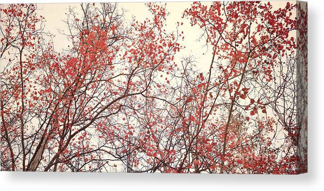 Red Canvas Print featuring the photograph canopy trees II by Priska Wettstein