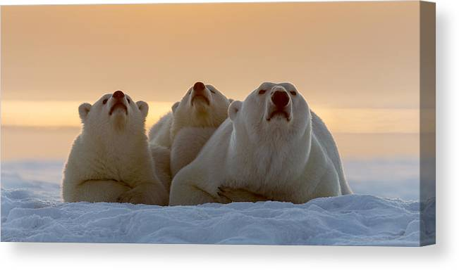 Anwr Canvas Print featuring the photograph Three Noses Panorama by Tim Grams