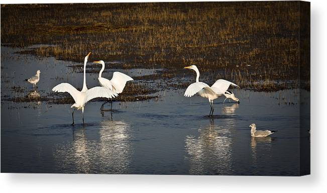 Birds Canvas Print featuring the photograph The Egrets by Steve McKinzie