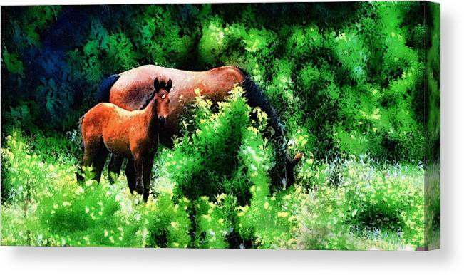 Horse Canvas Print featuring the photograph Horse Family by Galeria Trompiz