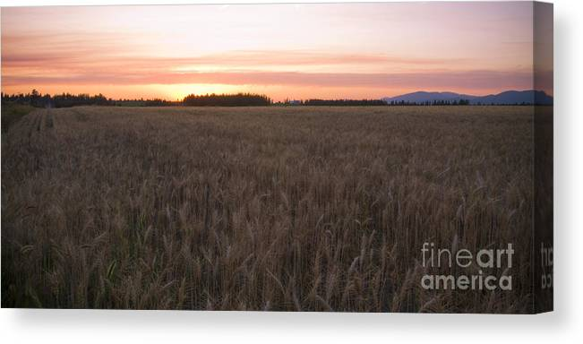 Fields Canvas Print featuring the photograph Prairie Pink by Idaho Scenic Images Linda Lantzy