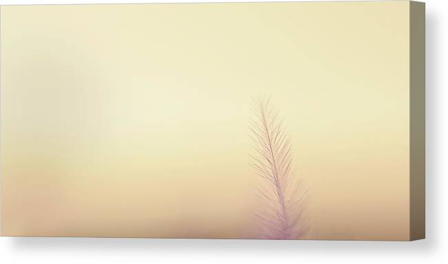 Delicate Canvas Print featuring the photograph The Questions Worth Asking by Scott Norris