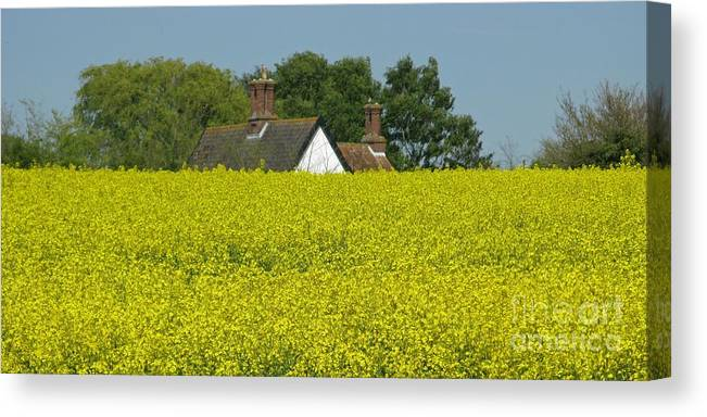 Landscape Canvas Print featuring the photograph Yellow Gold by Ann Horn
