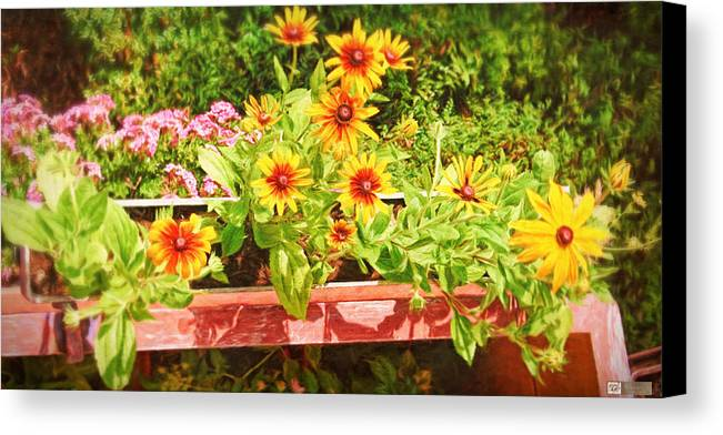 Landscape Canvas Print featuring the photograph A Daisy Day by Earl Ricks