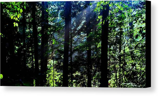 Mist Canvas Print featuring the photograph Mist, Leaves And Sunlight by Bill Driscoll