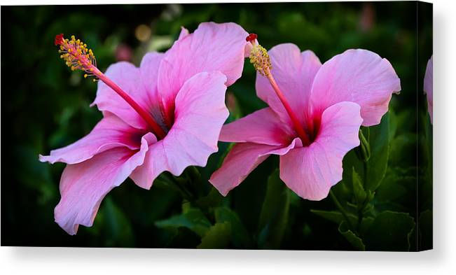 Hibiscus Canvas Print featuring the photograph Pink Hibiscus II by Athena Mckinzie