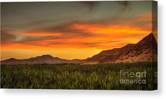 Emmett Canvas Print featuring the photograph Sunrise Over A Corn Field by Robert Bales