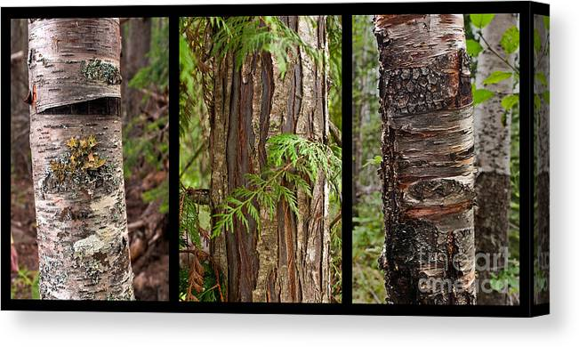 Tree Wear By Nature Canvas Print featuring the photograph Tree Wear By Nature by Sandi Mikuse