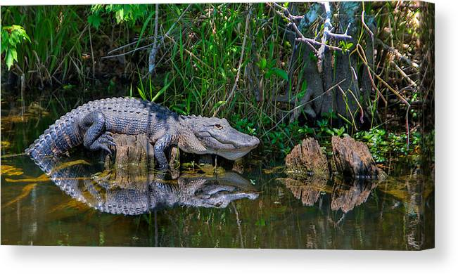 Canvas Print featuring the photograph Happy Gator by William Wetmore