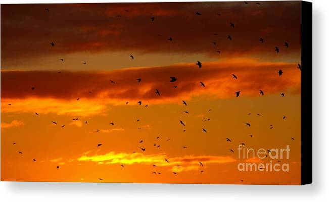 Birds Canvas Print featuring the photograph Birds Against Sunset Sky by Kerstin Ivarsson
