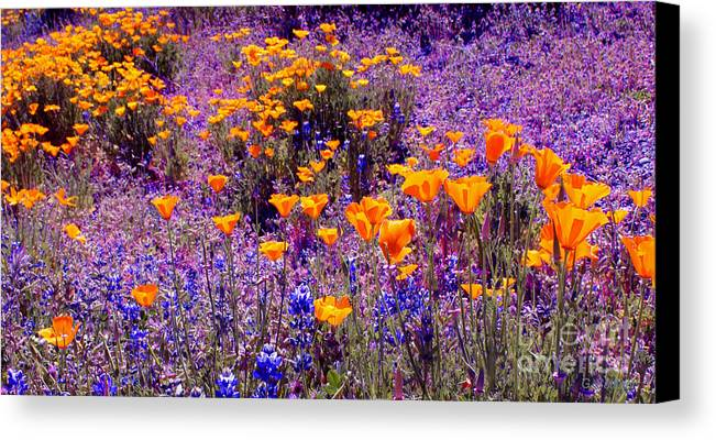 Poppy Canvas Print featuring the photograph California Poppy And Lupin by Gail Salitui